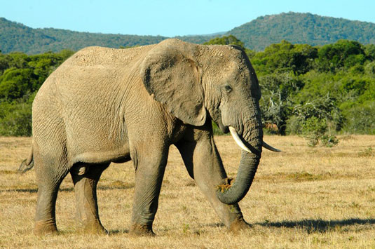 Greater Addo and Eastern Cape Game Park Reservations