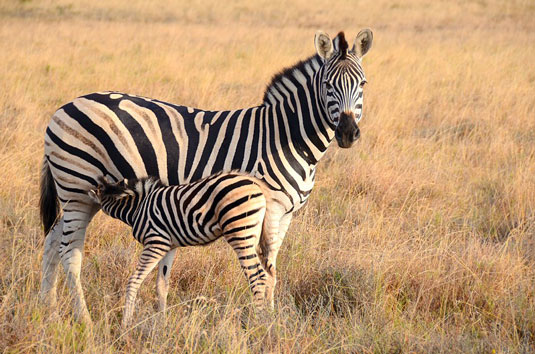 Eastern Cape Game Park Reservations